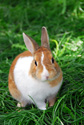 Animals Bunny