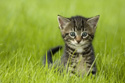 Animals Cat in Grass