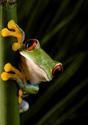 Animals Frog