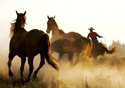 Animals Herding Horses