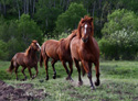 Animals Line of Horses