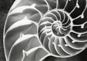 Art Nature Spiral Gray