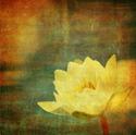 Floral Art Grunge Flower