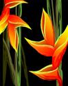 Floral Gladiola Flower Art