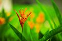 Floral Green Flower