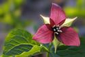 Floral Nature Flower