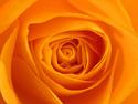 Floral Orange Flower