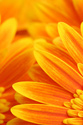 Floral Orange Flower Petals