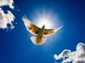 Inspire Blue Dove