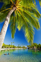 landscape palm tree
