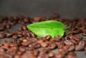 restaurant leaf