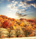 Serene Landscapes Fall Trees