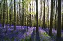 Serene Landscapes Forest