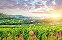 Serene Landscapes Vineyard