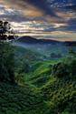 Serene Landscapes Wine Hills