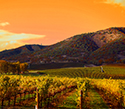 Serene Landscapes Wine Vines