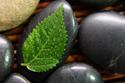 Spaspirit Stone Leaf