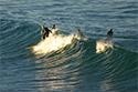 Sports Surfers
