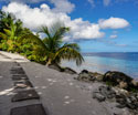 Tropical Landscapes Beach Path