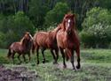 Wildlife Horse Line