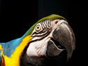 Wildlife Macaw