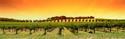 Wine Ylw Vines
