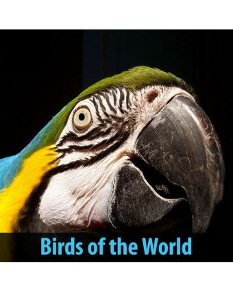 Birds of the World Acoustic Panels