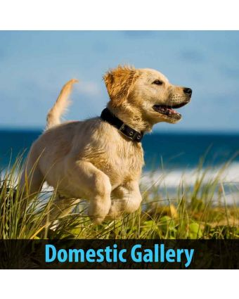 Domestic Gallery of Home Acoustic Treatment