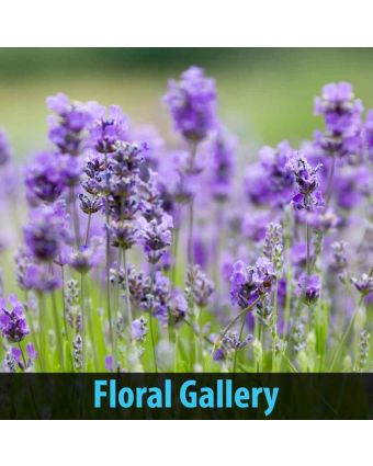 Floral Gallery of Sound Wall Panels