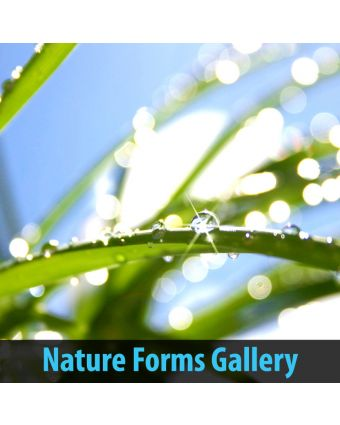 Nature Forms Gallery of Decorative Panel