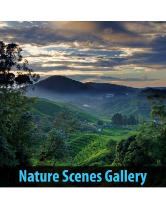 Nature Scenes Gallery of Panels Acoustic