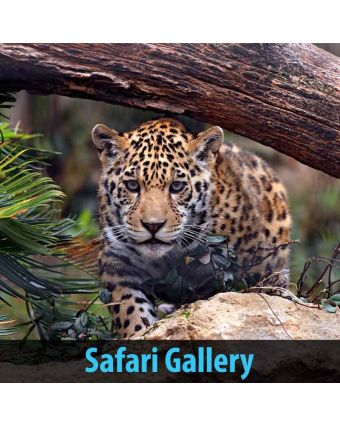 Safari Gallery of Acoustic Sound Panels