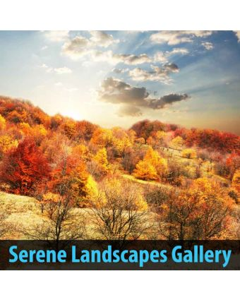 Serene Landscapes Gallery of Hospital Decoration
