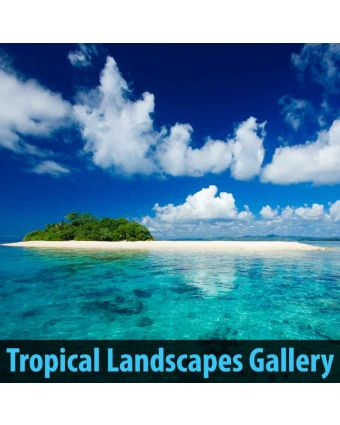 Tropical Landscapes Gallery of Acoustical Wall Panel
